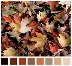 Sharing some of my favorite color pallets for autumn for Friday Favorites today….which is your favorite?