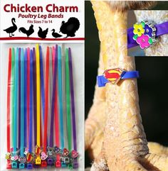 Fun way to identify your Chickens, Duck, Geese, and other poultry! Charm Leg Bands are enjoyable to see on your feathered friends and it is entertaining to watch charms float about your pens. Have more pens of birds than there are colors of bands? Add a charm to the band to expand the identifying possibilities. QTY 1 = Set of 5 Flowers, 5 Hearts, 5 Lady Bugs in 5 different colors plus 3 but