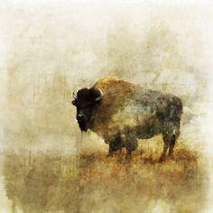 Peaceful Bison 02: Giclee Fine Art Print 13X19 by krokoart on Etsy