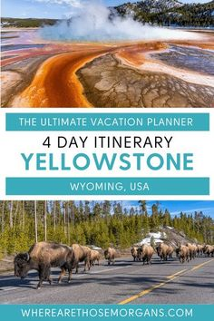 The best way to spend 4 unforgettable days in Yellowstone national park, Wyoming. Comprehensive guide to each of the 6 Yellowstone regions, best things to do and see, where to see wildlife, how to get around and much more. #yellowstone #nationalparks #wyoming Visit Yellowstone, Yellowstone Vacation, Yellowstone National Park, Lamar Valley, Best Travel Guides, Vacation Planner, Argentina Travel, National Parks Usa, Ultimate Travel