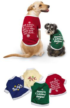 Is your #dog in the #holiday spirit yet? #Christmas.
