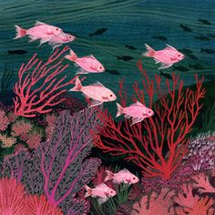 beccastadtlander.com | underwater sea illustration | fish | coral | teals blue pinks and purples | gouache?