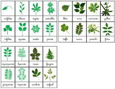 Leaf Identification, Bricolage Halloween, Montessori Activities, Too Cool For School, Edd, Shabby Vintage, Land Art, Botany, Trees To Plant