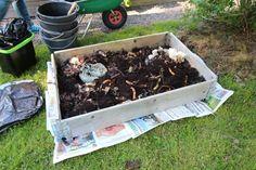 Gardening For Beginners, Gardening Tips, Garden Compost, Growing Seeds, Garden Inspiration, Garden Plants, Green, Handmade, Outdoor