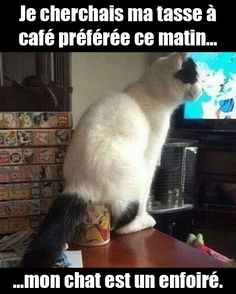 Funny pictures of the day – 42 pics cat noises, cats, animals, gatos Funny Animal Memes, Cute Funny Animals, Funny Animal Pictures, Funny Cute, Funny Memes, Animal Captions, Funniest Animals, That's Hilarious, Funny Pics