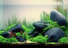 Aquarium einrichten Ideen Steine Wassepflanzen