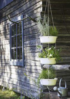 Herbs on porch Garden Cottage, Home And Garden, Little Gardens, Unique Gardens, Balcony Garden, Dream Garden, Vegetable Garden, Green Art, Container Gardening
