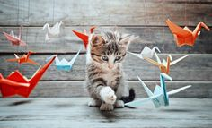 The Complete Book Of Origami Animals How To Make An Origami Elephant. The Complete Book Of Origami Animals Occasionally Punny Animals. The Complete Bo. Origami Day, Origami Books, Oragami, Kittens Cutest, Cute Cats, Origami Diagrams, Origami Elephant, Kitten Images, Kitty Cats