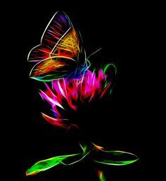 Butterfly by Bob Smerecki