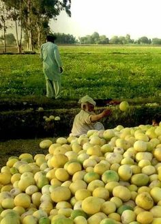 Pakistan punjab