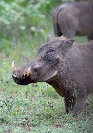 Top 36 Weird Animals Photos I Have Ever Seen - Animals Comparison Amphibians, Reptiles, Mammals, Animals Amazing, Cute Animals, Wild Boar, Game Reserve, Tree Art, Wildlife Photography