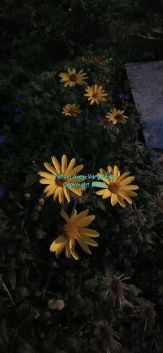 Kékrózsa Bíborvirág Blogja: Lövey-Varga Éva  Mesél a csend   (Óvnak a csillago... Evo, World, Plants, Plant, The World, Planting, Planets, Earth