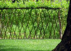 Living Garden Fences