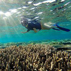 Diving in Sumba. Tenggirri bay