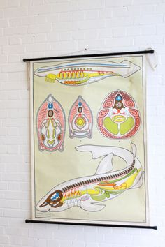 Large+German+Anatomical+Chart+Of+The+Shark+Circa+1960