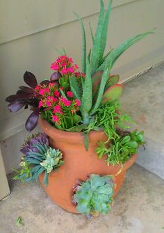 Just planted these succulents and cactus in an old herb pot.