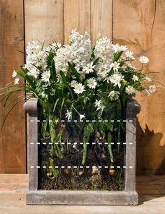 How to layer-plant flower bulbs - David Domoney Garden Bulbs, Planting Bulbs, Planting Flowers, Garden Pots, Container Flowers, Container Plants, Container Gardening, Flower Garden Layouts, Cut Flower Garden