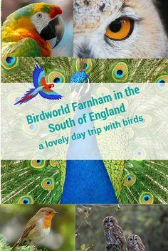 Birdworld Farnham | Jenny Wrey Farm | Underwater World | Family day out | Flight Displays | Birds