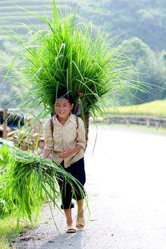 Randonnées Vietnam Laos, Vietnam Voyage, Trekking, Vibrant Colors, Tours, Night, Nature, Asia, Beautiful
