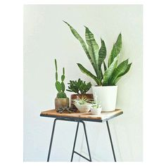 cactus_for_love's photo on Instagram