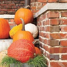 From roasted winter squash to winter squash soup, pumpkin, butternut squash, acorn squash, and spaghetti squash are the stars of the show in these winter squash recipes. Hydrangea Potted, Hydrangea Arrangements, Chili Pot Pie Recipe, Winter Squash Soup, Potato Pasta, Pumpkin Display, Butternut Squash Pasta, Pumpkin Beer, Toasted Pumpkin Seeds