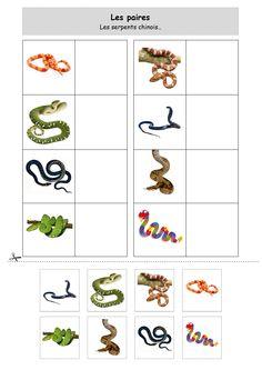 loto serpent