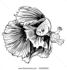 Image result for betta fish drawing