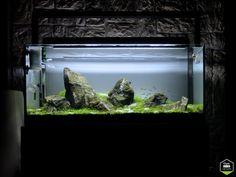 Iwagumi par Marlou #aquascaping #aquarium