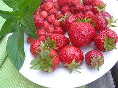 Začátek prázdnin voní jahodami - co s nimi a proč