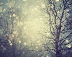A winter's tale  Fine art photograph  Snow by EyePoetryPhotography