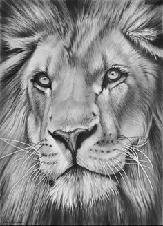 Realistic Drawings That Will Have You Raving Over The Detail.- Realistic Drawings That Will Have You Raving Over The Details Richard Symonds wildlife art gallery and online shop - Wildlife Paintings, Wildlife Art, Drawing Sketches, Art Drawings, Drawing Art, Drawing Animals, Drawing Ideas, Amazing Pencil Drawings, Lion Head Drawing