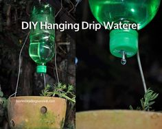 How To Make A DIY Hanging Drip Waterer!  See how to make it here: http://homesteadingsurvival.com/diy-hanging-drip-waterer/