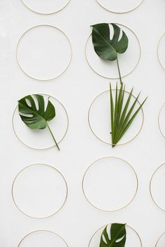 Rings and leaves are the perfect combination to create the most elegant and simple backdrop: