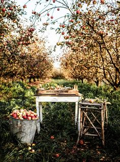 Food – Kara Rosenlund