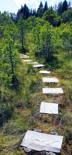 Mohos Peat Bog is a wonder of volcanic activity in which water, wildlife, and some wood steps aret the recipe for an amazing experience. Wooden Path, Water Experiments, Visit Romania, Wood Steps, Wild Forest, Walk On Water, Carnivorous Plants, Wood Bridge, Small Plants