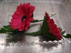 Gerbera buttonholes