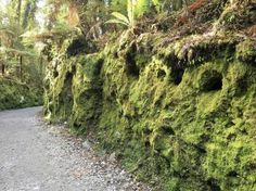Moss-thick growth everywhere in New Zealand's temperate rain forests. More at www.travelswithtalek.com