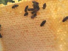 تبدیل شهد به عسل ـ قسمت دوم ـ تغلیظ شهد