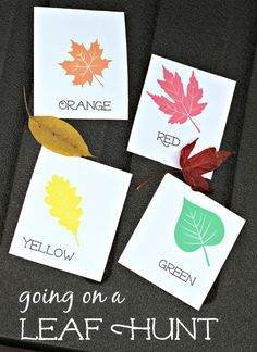 Head outside this Fall for a fun nature & math activity that's perfect for kids of all ages!