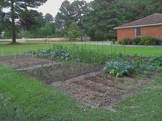 Our Young garden