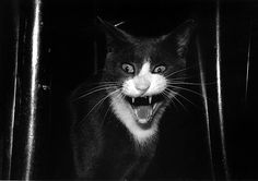 """Tony Mendoza.  """"What IS that??!! A mouse?????!!!"""" (we had a cat who ran the other way)"""