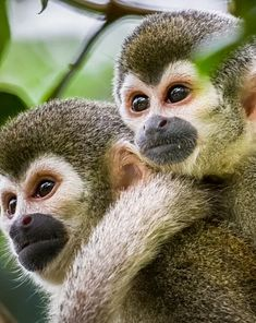 Beautiful Creatures, Animals Beautiful, Cute Animals, Monkey Girl, Art Drawings Beautiful, Puppies And Kitties, Cute Animal Pictures, Animals Of The World, Primates
