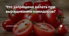 Многие начинающие садоводы утверждают, что они знают абсолютно все о выращивании томатов, но к большому разочарованию это далеко не так, а всего на всего громкое заявление. Большая часть таких садоводов допускают обыкновенные ошибки, которые могут существенно снизить урожайность в конце сезона. Сегодня мы рассмотрим основные ошибки садоводов, которые вам не стоит повторять, если не хотите лишиться