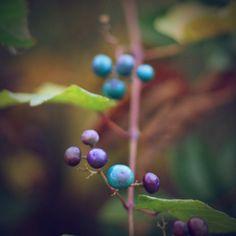 berry beautiful | Flickr: partage de photos!