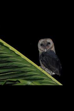Beautiful little Owl!