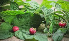Strawberry, Herbs, Fruit, Nature, Plants, Food, Fitness, Alcohol, Naturaleza