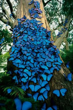 Blue butterfly colony - So beautiful! If can't see the hand of God here I don't know what is wrong with you!