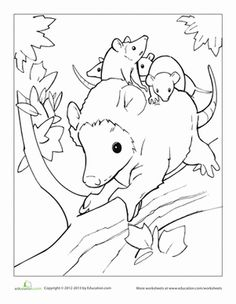 These adorable opossums need some colors! Get together with your little one and color this mother opposum as she gives her babies a ride through the treetops.