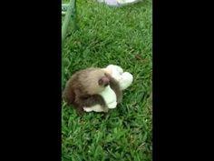 Sloth hugging his teddy bear! He is sooooo happy!