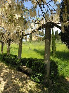 Villa La Pietra > Garden